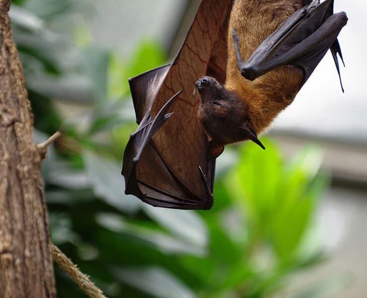 كيف يمكن للحيوانات أن تساعدنا على فهم الفيروسات؟