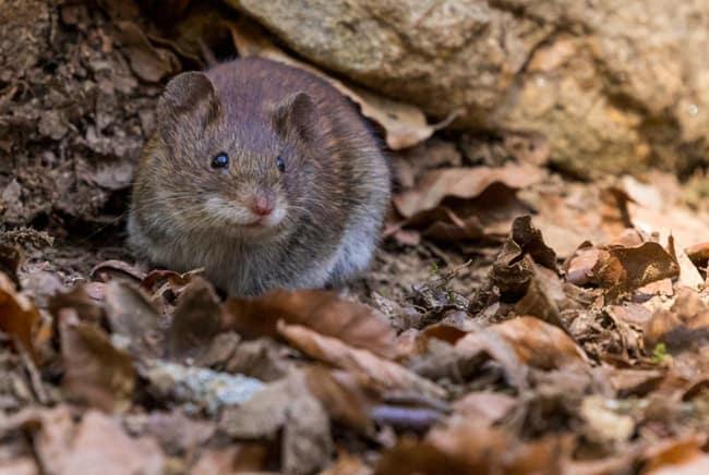 فأر, بيئة, صحة, تعايش