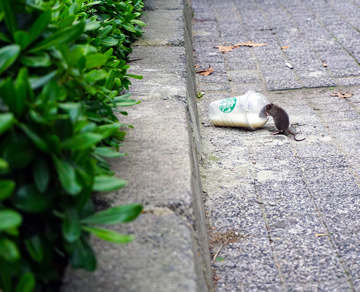 هل التعايش مع الفئران يعد حلاً للتخلص منها؟