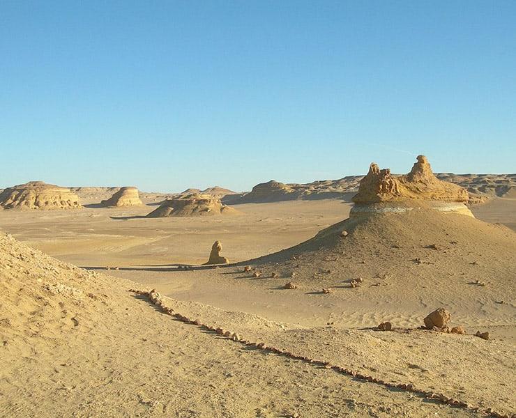 اكتشاف حفريات لحوت مصري قد تملأ ثغرات في تطور الحيتان