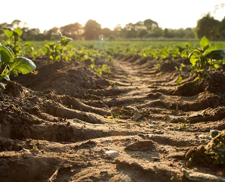 التربة هي أفضل حليف لنا في الحرب ضد التغير المناخي