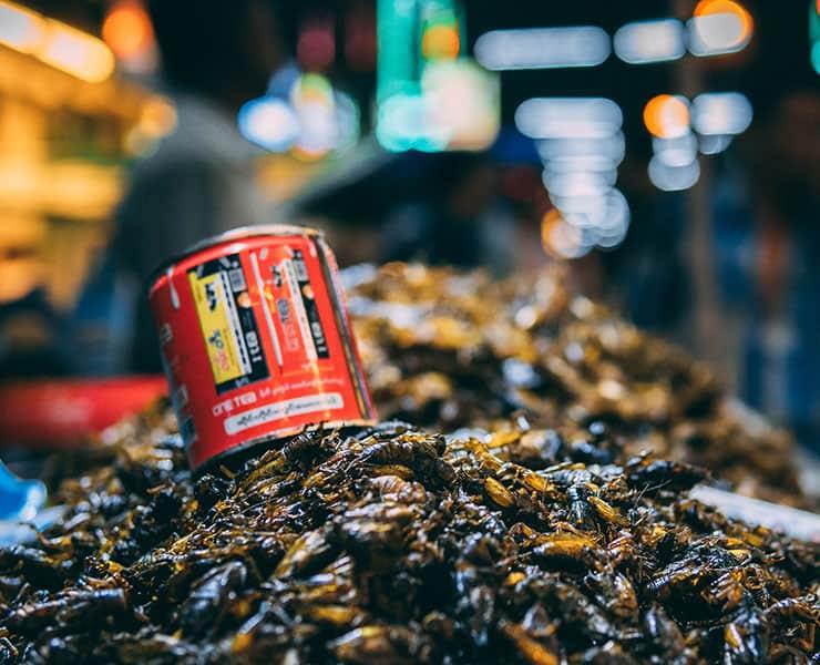 هل يمكن أن تساهم تربية الحشرات في توفير الأمن الغذائي؟