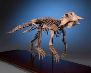 كيف يحدد العلماء عمر الديناصور حين وفاته؟