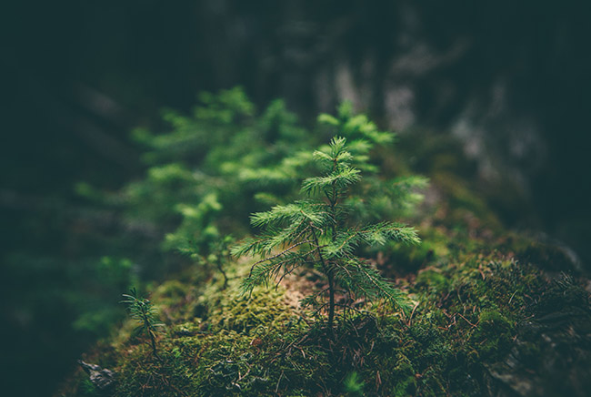 نبات, كوكب الأرض, سنة 2020, تفاؤل, لايف ستايل