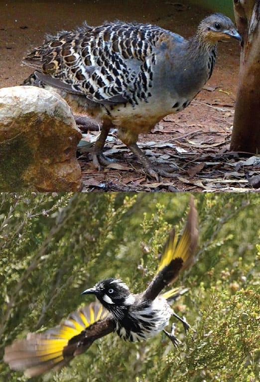 طيور, انقراض, غابات, شجر, الحياة على الأرض, بيئة, حراق الغابات