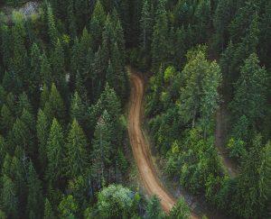 هل تعيد حرائق الغابات تشكيل الحياة على الأرض؟