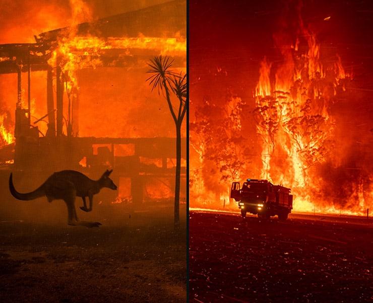 3 مليار حيوان متضرر من حرائق الغابات في أستراليا