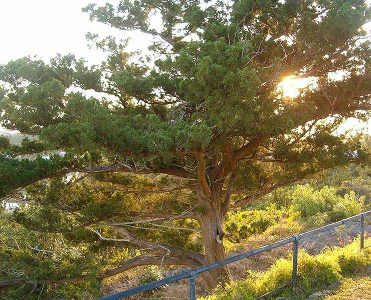 حتى الأشجار قد تواجه خطر الانقراض بسبب التغير المناخي