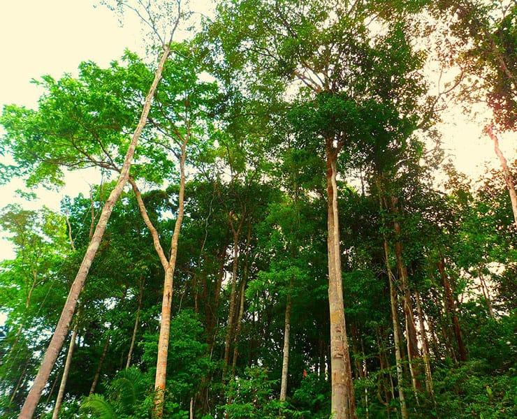 إلى أي مدى تقلصت مساحة غابات الأمازون خلال العقد الماضي؟