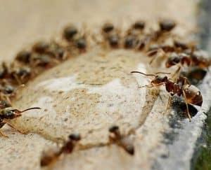أكلوا بعضهم: هكذا عاش النمل في مخبأ نووي لسنوات دون غذاء