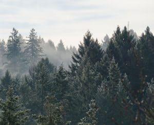 هل يمكن للنظم البيئية التعافي بعد الحرائق الهائلة؟