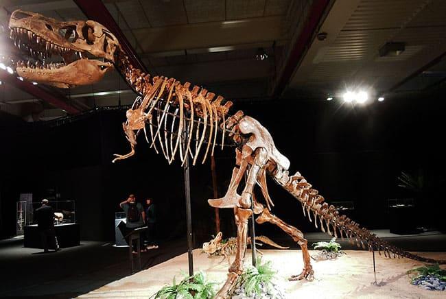 تربصور, ديناصور, ديناصورات