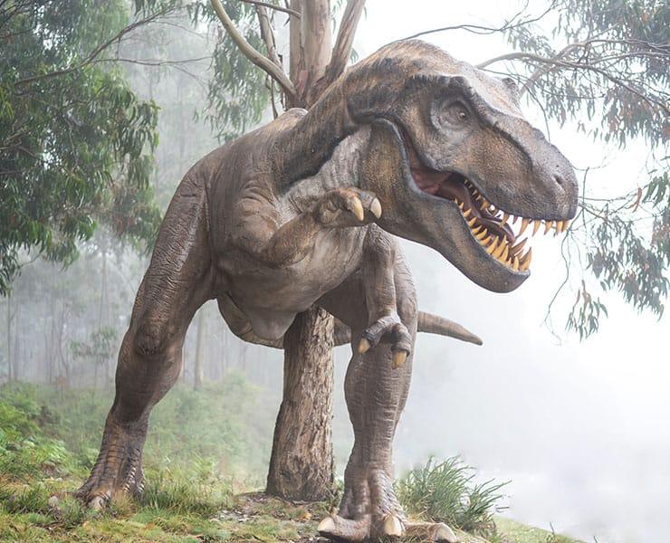 هياكل عظمية تظهر هيئة مختلفة للديناصور «تي ريكس»