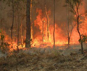 لهذه الأسباب قد تزيد جائحة كورونا من خطورة مواسم الحرائق