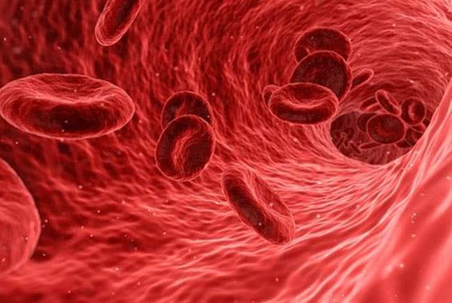 فصائل الدم, الدم, طب, علوم