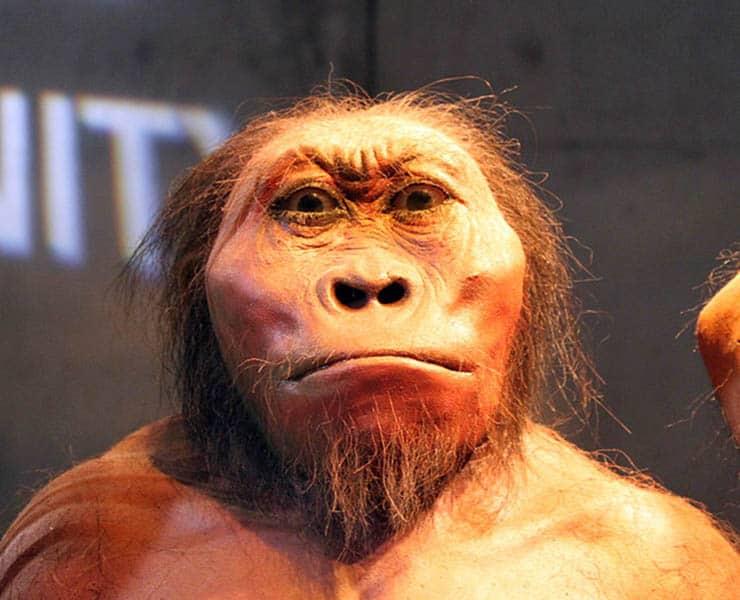 إلى أي مدى كان أسلاف البشر أذكياء؟