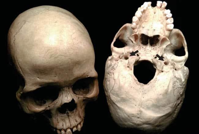 أسلاف البشر, نظرية التطور, الإنسان, الذكاء, متحف