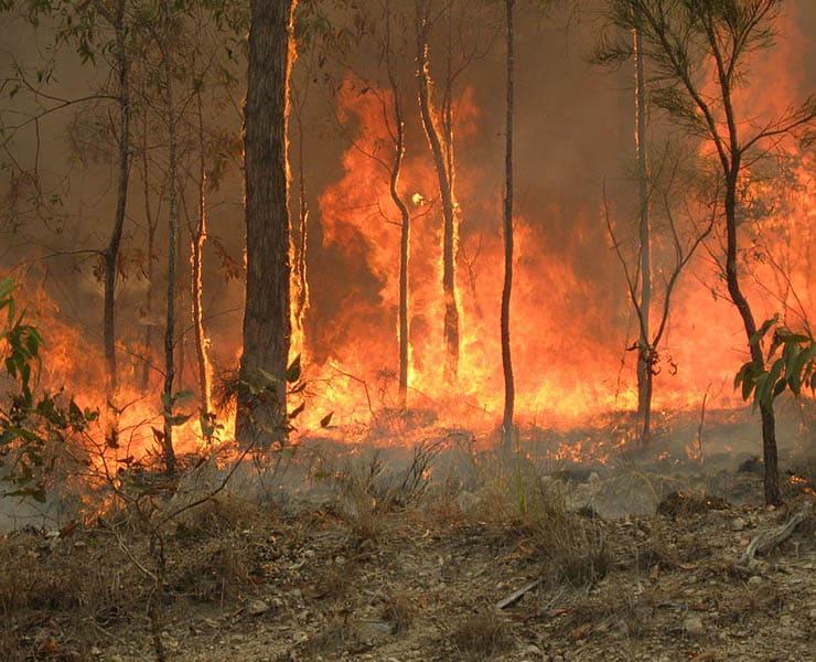 حرائق الغابات في أستراليا تكشف عن مدى هشاشة الأنظمة المدنية