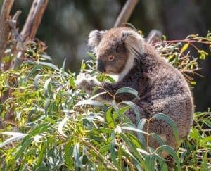 7 تعديلات ينبغي إدخالها على قانون حماية البيئة في أستراليا
