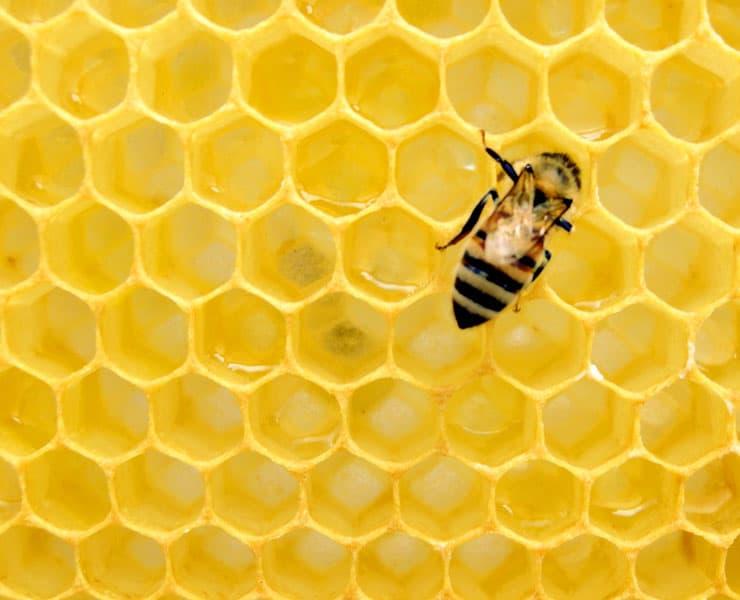 تطوير طريقة للكشف عن المبيدات الحشرية في عسل النحل
