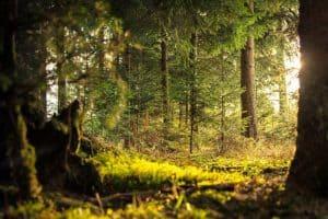 تؤثر سلباً على البيئة: النباتات الغازية تستغل العواصف لتحتل الغابات