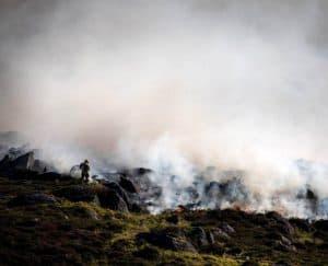 كيف تؤثر أنواع الحيوانات في حرائق الغابات؟