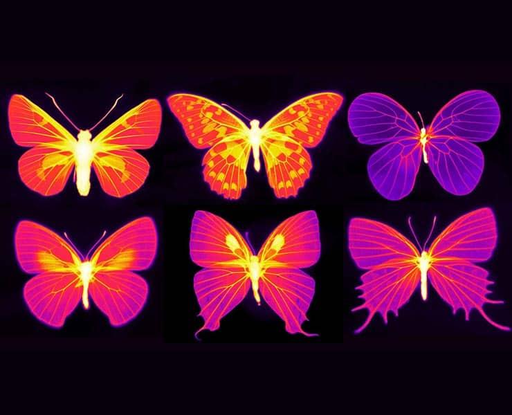 صور بالأشعة تحت الحمراء تظهر القدرة المذهلة لأجنحة الفراشات