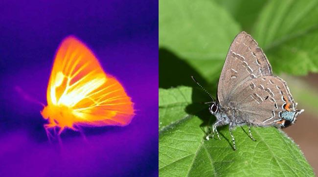 فراشات, علوم, حشرات, مقالات علمية