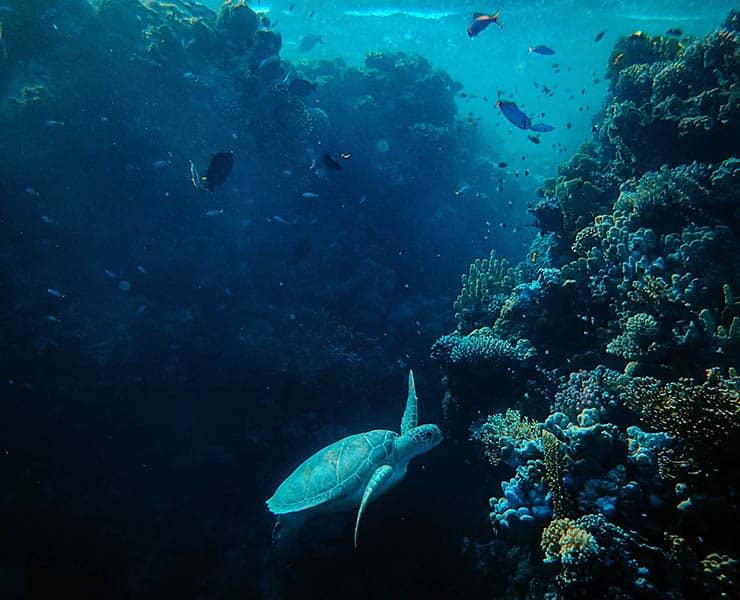 هكذا صار المحيط «عالم أزرق شاسع مليء بالضوضاء»