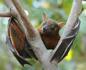 ماذا تعرف عن عالم الخفافيش؟ هذه الرحلة الموجزة ستخبرك
