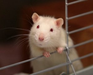 هل من الضروري تكثيف الأبحاث على الحيوانات لمنع الجائحة القادمة؟
