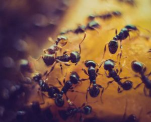 التباعد الاجتماعي, أمراض معدية, النمل, عالم الحيوان