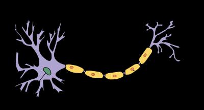 خلية شوان