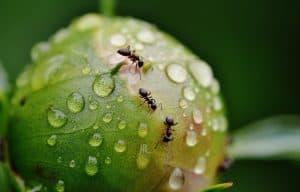 يذهب ويعود ولا يخطئ: كيف يتواصل النمل؟