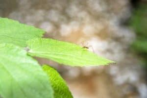 هل ينقل البعوض فيروس كورونا؟ وماذا عن الذباب؟