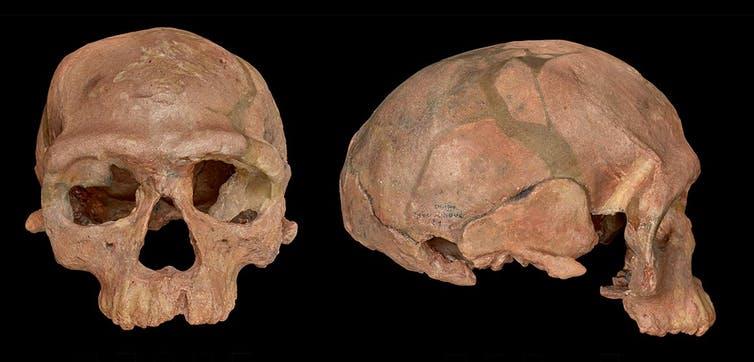 عظام الإنسان العاقل البدائي