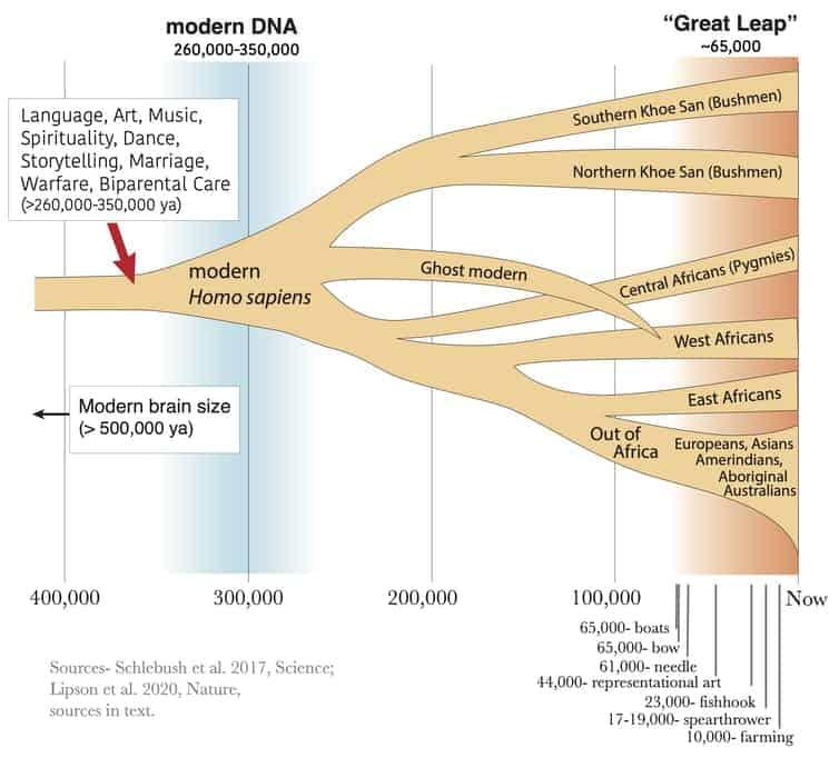 حفريات تؤكد تطور ذكاء البشر