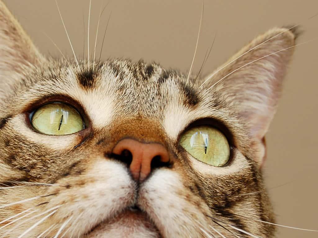 لماذا يخاف بعض الناس من القطط؟
