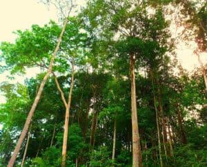 التحذير من تحول غابات الأمازون المطيرة إلى سافانا عشبية