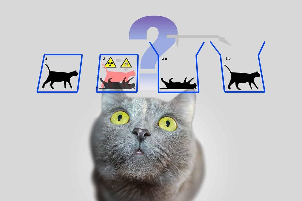 هل يمكن أن توجد قطة شرودنجر في الحياة الواقعية؟