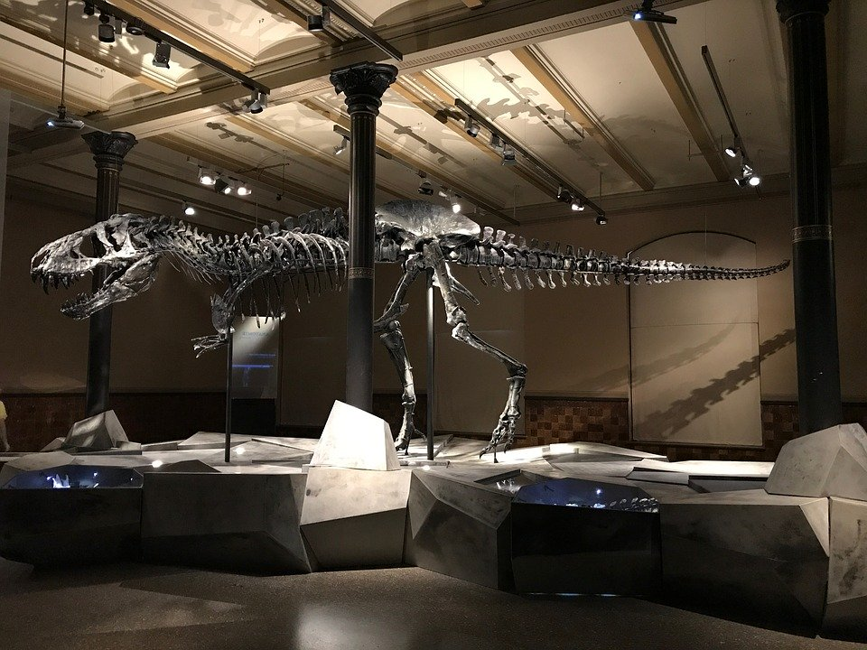 اليوم بنصف دولار: ديناصور تي ريكس يحطم الرقم القياسي ب31 مليون دولار