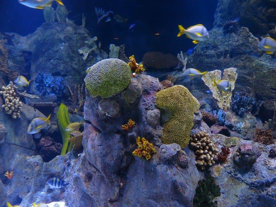 الحاجز المرجاني العظيم يفقد 50% من شعابه المرجانية