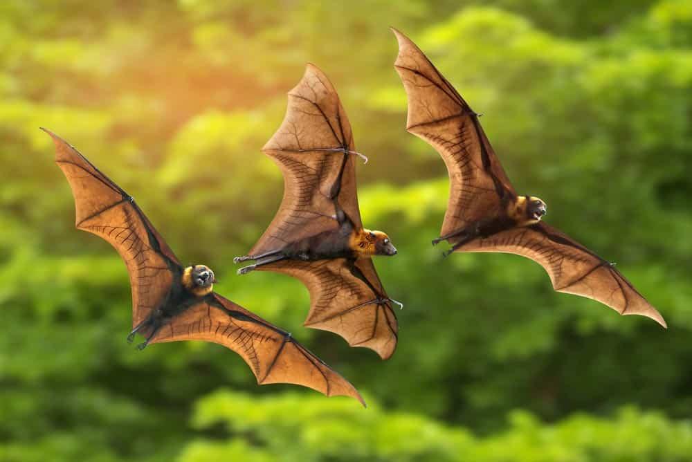 حتى الخفافيش تلتزم بالتباعد الاجتماعي عندما تشعر بالمرض