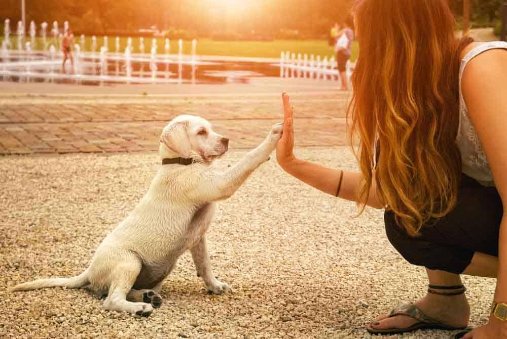 قصة صداقتنا الأبدية مع الكلاب