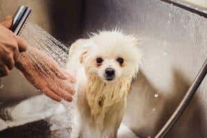 دليلك الشامل للاهتمام بحيوانك الأليف في المنزل