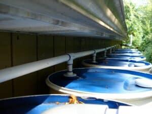 تخزين مياه الأمطار طريقة سهلة لتوفير المال وإنقاذ الكوكب
