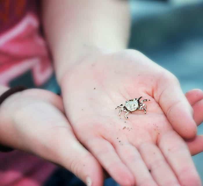 قد تكون الحشرات مصدر إلهام جيد لتعليم الأطفال عن الطبيعة
