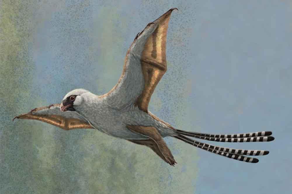 هكذا كانت رحلة بعض الديناصورات في السماء