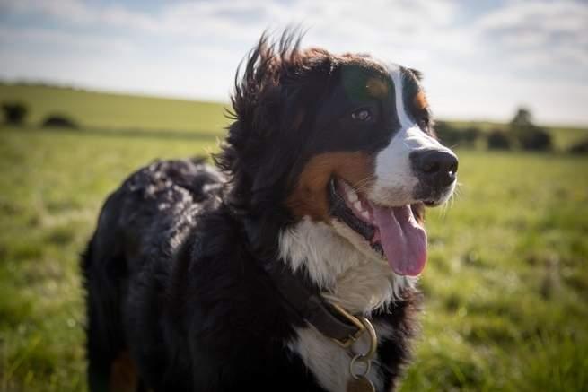 مثلما يصاب بها البشر: لماذا تصاب الكلاب بالحساسية؟