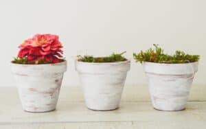 اصنعها بنفسك: أواني اسمنتية للزهور والنباتات
